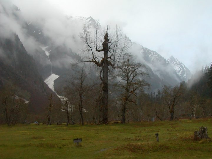 """""""Enchanted Valley, Olympic National Park"""". Credit: National Park Service, 2010, public domain."""