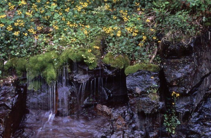 """Golden Ragwort With Waterfall"". Shenandoah National Park, National Park Service, 2010, public domain."